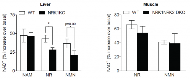 First ever long-term study of nicotinomide riboside (NR