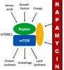 Geroprotector review: Rapamycin
