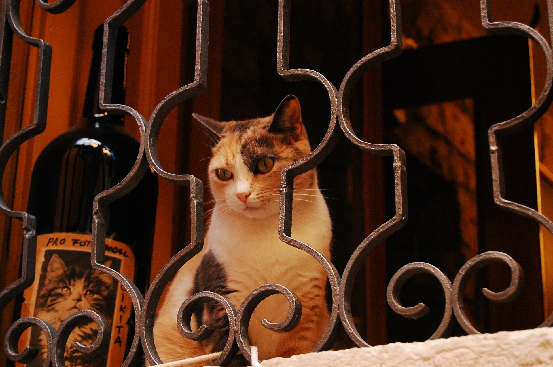 Writers Are Cats on the Window Sill of Life