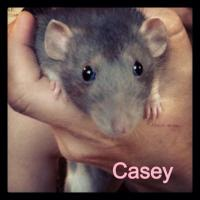 Casey.jpg