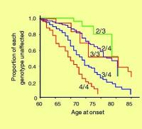 Alzheimers-disease-age-of-onset-curves-by-APOE-genotype-based-on-the-information_W6401.jpg