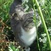 Dazzcat's Photo