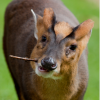 Sunflower lecithin causing burning lips - last post by muntjac